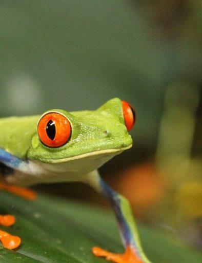 Naturaleza Costa Rica